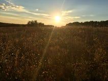 Mystischer Sonnenuntergang über einem Feld des Grases im Herbst Lizenzfreies Stockfoto