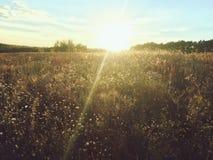Mystischer Sonnenuntergang über einem Feld des Grases im Herbst Stockfotos