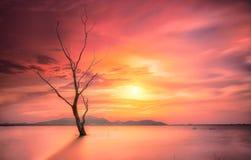 Mystischer toter Baum Stockfotografie