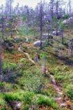 Mystischer trockener Wald Stockbild