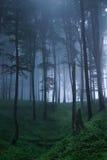 Mystischer Wald Lizenzfreie Stockbilder