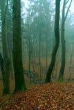 Mystischer Wald Stockbild