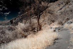 Mystischer Wald Stockfoto