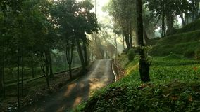 Mystischer Wald auf dem Morgen Stockfotos