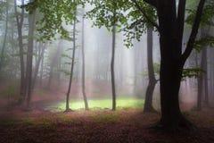 Mystischer Wald während eines nebeligen Tages Stockbild