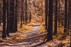Mystischer Waldweg, abstrakte Farbe Stockfoto