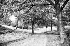 Mystischer Waldweg mit intersting Blitz von der Seite Lizenzfreie Stockbilder