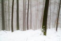 Mystischer Winterwald: schneebedeckt und nebelig Stockbilder