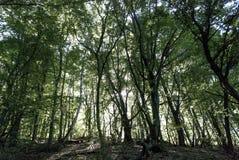 Mystisches Holz in Sarmisegetusa, Rumänien, wytical Landschaft Stockbild