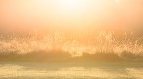 Mystisches Tagesanbruch-Gras Lizenzfreie Stockfotos