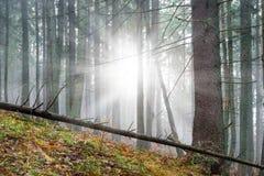 Mystisk dimma i den gröna skogen Royaltyfri Foto