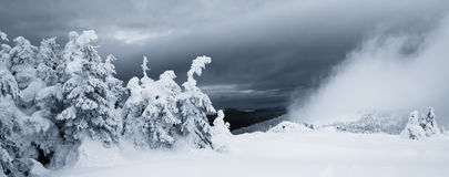 Mystisk dimma och gran-träd i vinterberg panorama Royaltyfri Foto