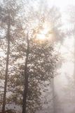 Mystisk dimmig höstskog med svagt solljus royaltyfria bilder