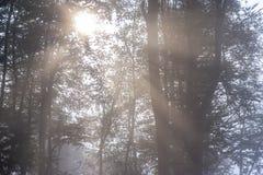 Mystisk dimmig höstskog med svagt solljus arkivfoton