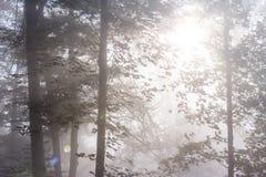 Mystisk dimmig höstskog med svagt solljus arkivbild