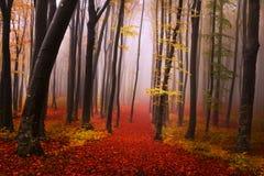 Mystisk dimmig skog med en sagablick Royaltyfri Foto
