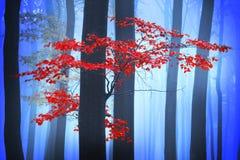 Mystisk dimmig skog med en sagablick Arkivbilder