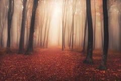 Mystisk dimmig skog med en sagablick Royaltyfria Bilder