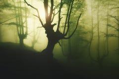 Mystisk dimmig skog på våren royaltyfri fotografi