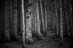 Mystisk dyster mörk skogHaloween bakgrund arkivfoton
