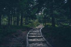 Mystisk fotvandra slinga i bergen arkivfoto