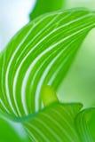 mystisk härlig grön leaf Royaltyfri Fotografi
