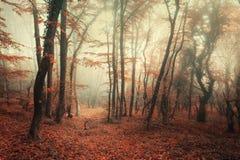Mystisk höstskog i dimma med röda och apelsinsidor Royaltyfria Bilder