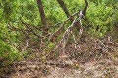 Mystisk illavarslande skog royaltyfri fotografi