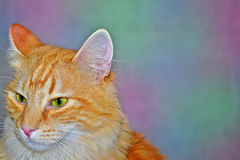 Mystisk katt i en färgrik bakgrund Royaltyfri Foto
