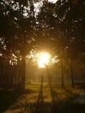 mystisk ljus morgon Fotografering för Bildbyråer
