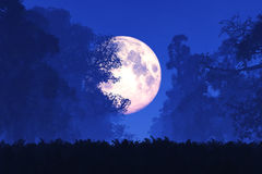 Mystisk magisk fantasisagaskog på natten i fullmånen royaltyfri foto