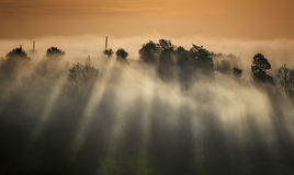 mystisk morgon Arkivfoto