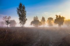 Mystisk morgontid i träskområde Royaltyfri Bild