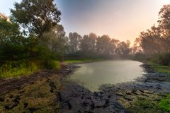 Mystisk morgontid i träskområde Arkivfoton