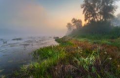 Mystisk morgontid i träskområde Fotografering för Bildbyråer