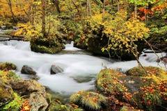 Mystisk Oirase ström i höstskogen Royaltyfri Foto