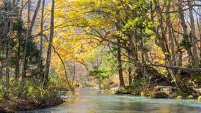 Mystisk Oirase ström som in flödar till och med höstskogen till Royaltyfria Bilder