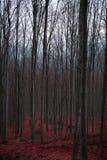 Mystisk röd skog i västra Serbien Arkivfoto