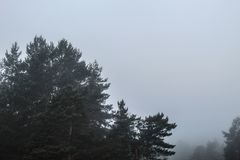 Mystisk rysk skog och tjock dimma royaltyfria bilder