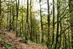 Mystisk, sagolik skrämmande skog royaltyfri fotografi