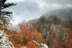 mystisk skog Royaltyfria Foton
