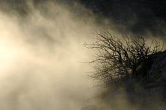 mystisk skog Fotografering för Bildbyråer
