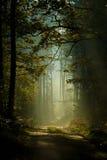 Mystisk skog Royaltyfri Fotografi