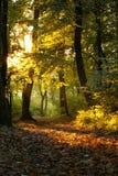 mystisk skog arkivfoton