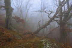 mystisk skog Arkivfoto