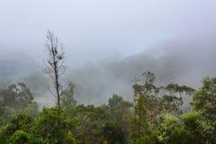 Mystisk skog i dimma Arkivfoto