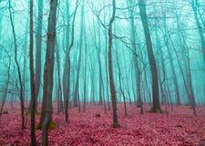 Mystisk skog i rött och turkos royaltyfri foto