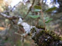 Mystisk skog, laver på filialer av träd och gamla stammar arkivbild