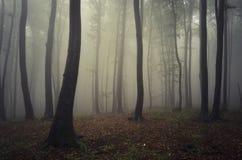 Mystisk skog med dimma i höst Royaltyfri Bild