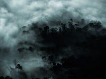 Mystisk skog med dimma- och mörkerträdområde för kopieringsutrymme royaltyfri bild